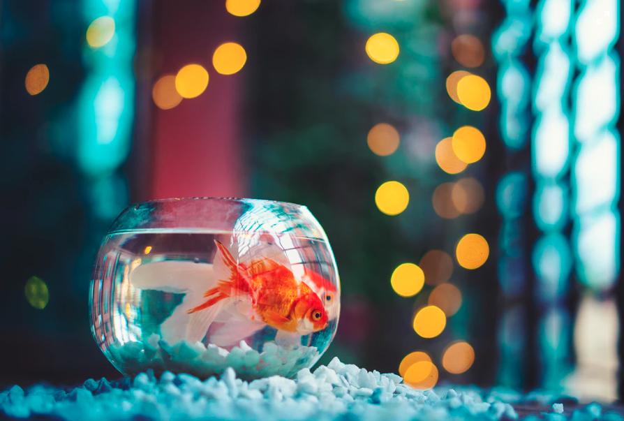 Triumph über das Goldfisch-Phänomen: Guter Werbetext bannt die Aufmerksamkeit.